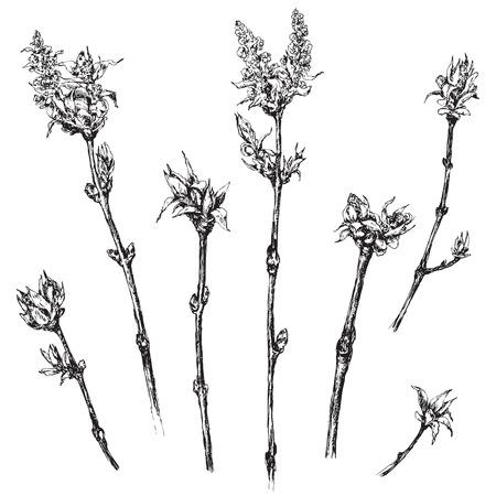 小さな若い葉を持つ手描きの木の枝。春のテーマイラスト。ベクトル スケッチ。