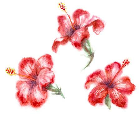 Watercolor painting.  Hand drawn red hibiscus isolated on white. Tropical flowers aquarelle sketch in wet technique. Zdjęcie Seryjne