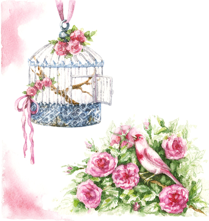 Watercolor painting.  Hand drawn pink canary sitting in rose bush and hanging birdcage isolated on white. Bird and cage decorated ribbons and flowers in shabby style.