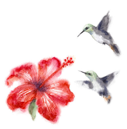 水彩画。 白に隔離されたハチドリや花を描いた手描き。赤いハイビスカスの近くを飛ぶ小さなハチドリ。 ウェットテクニックのアクエリラスケッチ。 写真素材 - 95562214