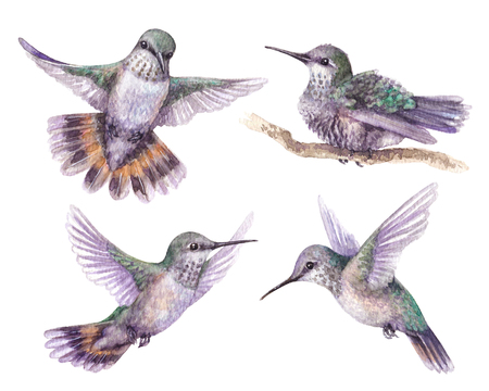 Watercolor painting.  Hand drawn humming birds isolated on white. Flying and sitting on branches hummingbirds.  Front and side view colibri flight. Standard-Bild