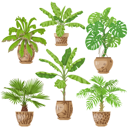 Potted tropical Plants Set includes Palm trees, banana plant, washingtonia, monstera in flowerpots isolated on white illustration.