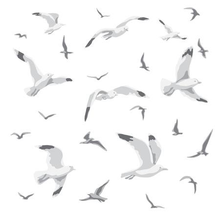 Flock of flying seagulls.