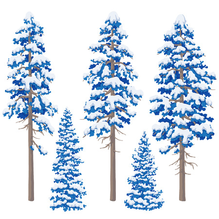 Blue pine trees isolated on white backgrouund. Set of conifers. Winter snowcovered trees. Vector flat illustration.
