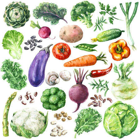 Hand drawn raw food illustration. Set of organic products. Watercolor various vegetables, greens and beans isolated on white background. Stock Photo