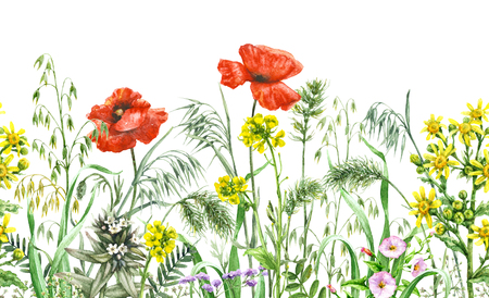 Hand drawn floral horizontal seamless border with watercolor wildflowers. Summer pattern with red poppies and yellow flowers in row on white background. Zdjęcie Seryjne