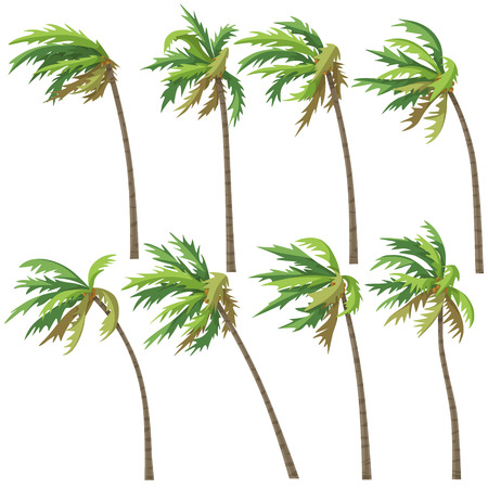 Set of palm trees on wind storm isolated on white background. Tropical landscape element design. Vector flat illustration. Ilustração