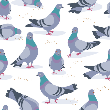 Seamless pattern made with rock doves on white background. Bluish pigeons in motion – walking and eating grains. Simplified image of gray birds group. Vector flat illustration. Stock Illustratie