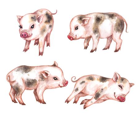 Maiale in miniatura carino disegnato a mano. Insieme dell'acquerello di divertenti micro suini isolati su priorità bassa bianca. Vista frontale e laterale del maialino.
