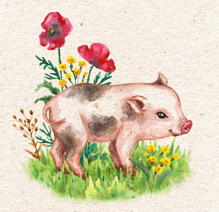 Hand drawn cute miniature pig walking on green grass near red poppies. Vintage card with watercolor flowers and funny animal.
