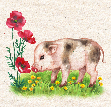 Hand drawn cute miniature pig walks on green grass and sniffs red poppies. Vintage card with watercolor flowers and funny animal.