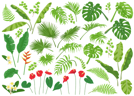 Vivid tropical flowers and green leaves isolated on white background. Tropic plant big set.  Vector flat illustration. Illustration