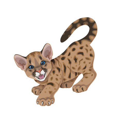 Pequeño puma enojado manchado con mandíbulas abiertas y garras. León de montaña americano joven aislado en blanco. Ilustración plana de vector de cachorro de puma divertido.