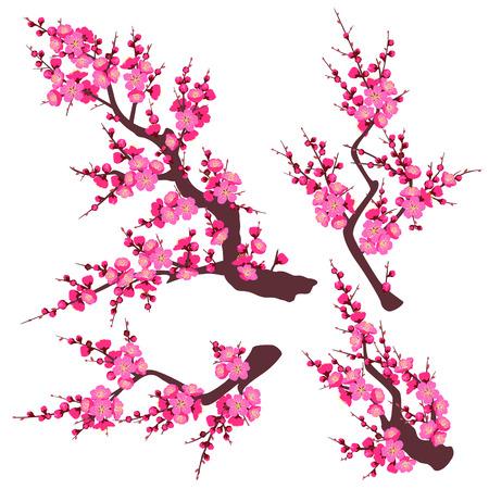 Zestaw kwitnących gałęzi drzewa z różowe kwiaty na białym tle. Kwiat śliwki jest symbolem wiosny i ozdobą chińskiego Nowego Roku. Płaskie ilustracji wektorowych.