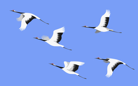 Simplified image of flying japanese storks isolated on colored background. Red-crowned cranes in blue sky side view. Bird flight flat illustration.