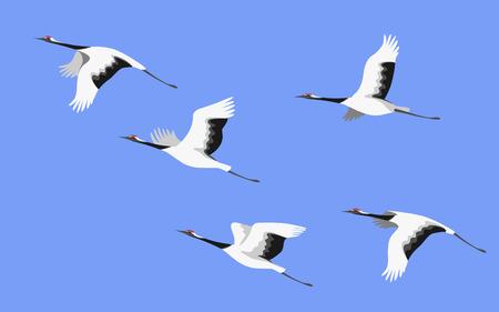 Uproszczony obraz latających bocianów japońskich na białym tle na kolorowym tle. Żurawie czerwono-koronowane w widoku z boku błękitnego nieba. Płaski ilustracja lotu ptaka.