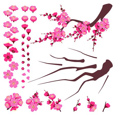 Elementi separati di fioritura della prugna isolati su bianco. Ramo e set di fiori rosa. Decorazione floreale primaverile per il capodanno cinese, celebrazioni primaverili. Parti piatte di vettore della pianta per l'animazione.
