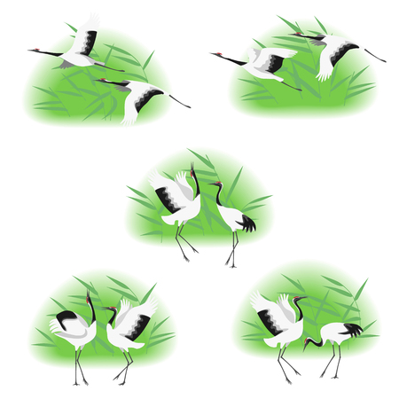 Simple image of dancing and flying japanese storks in reed thickets isolated on white background. Red-crowned cranes moving in dance and flight. Birds group flat illustration.