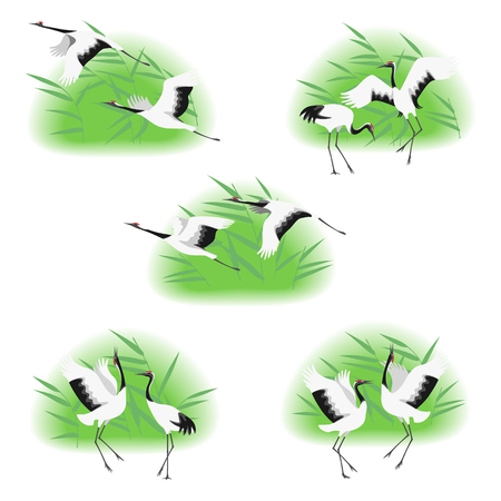 Simple image of dancing and flying japanese cranes in reed thickets isolated on white background. Red-crowned stork moving in dance and flight. Birds group flat illustration. Illustration