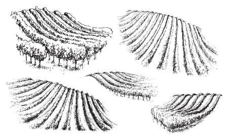 Insieme disegnato a mano di colline con vigneti. Frammento di scena rurale monocromatica. Schizzo di vettore.