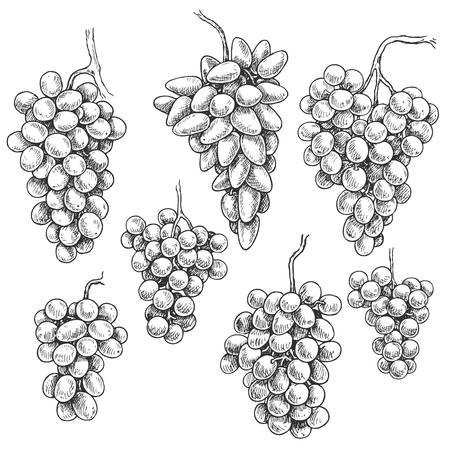 Ensemble de raisins monochromes. Grappes de raisin dessinés à la main isolés sur fond blanc. Croquis de vecteur.