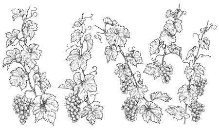 Ensemble de branches de raisins monochromes. Grappes de raisin dessinés à la main et feuilles isolées sur fond blanc. Croquis de vecteur.