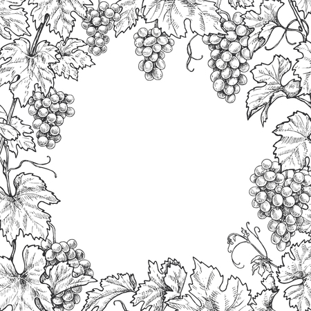 Monochrome square frame made with grapes branches and berries.  Hand drawn grape bunches and leaves. Black and white border with space for text. Vector sketch.