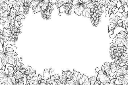 Monochrome rectangle horizontal frame made with grapes branches and berries.  Hand drawn grape bunches and leaves. Black and white border with space for text. Vector sketch.  イラスト・ベクター素材