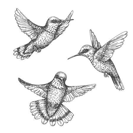 Ręcznie rysowane buczenie ptaków na białym tle. Monochromatyczne latające kolibry zestaw. Lot colibri z przodu iz boku. Szkic wektor.