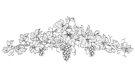 Hand drawn text divider made with monochrome grape branches with leaves and berries. Black and white decorations with grapes. Vector sketch.