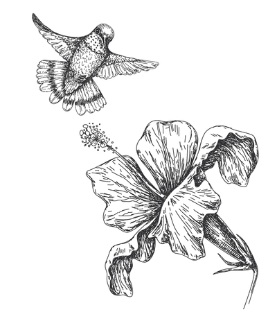 Hand drawn  monochrome humming bird and flower isolated on white. Small hummingbird flying near hibiscus.  Vector sketch.
