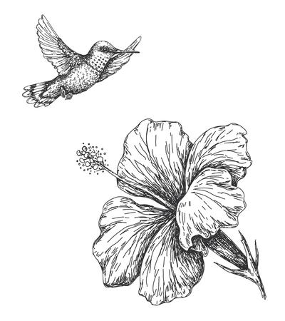 Dibujado a mano monocromo colibrí e hibisco aislado en blanco. Pequeño colibrí volando cerca de la flor. Bosquejo del vector. Ilustración de vector