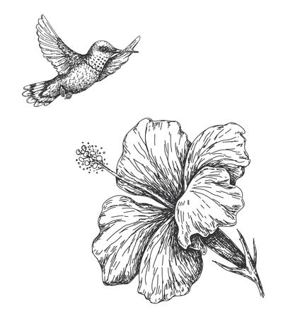 Hand drawn  monochrome humming bird and hibiscus isolated on white. Small hummingbird flying near flower.  Vector sketch. Vettoriali