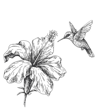 Hand drawn monochrome humming bird and hibiscus. Black and white illustration with flying small hummingbird and flower.  Vector sketch. Vettoriali