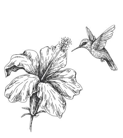 Ręcznie rysowane monochromatyczne kolibrów i hibiskusa. Czarno-biała ilustracja z latającym małym kolibrem i kwiatem. Szkic wektor.