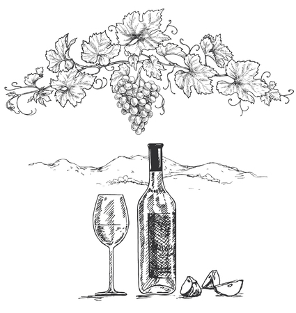 Hand drawn grape branch, pieses of apple, bottle and wine glass on white background. Monochrome vector sketch. Ilustracja