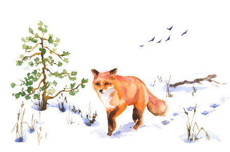 Watercolor painting. Hand drawn animalistic illustration. Red fox walking on snow covered meadow. Winter scene with wild predator motion, fir-tree, dried grass and flying birds.