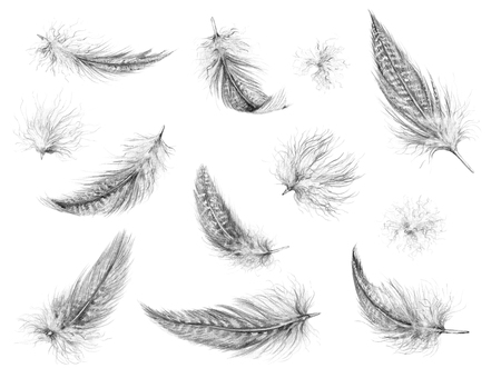 Hand drawn set of various feather isolated on white. Realistic feathers pencil drawing. Фото со стока