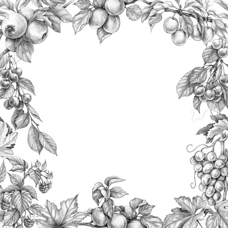 Hand drawn branches of fruit trees and bushes. Monochrome border made with sketch of fruits. Square frame with apple, apricot, grape, plum, raspberry, cherry and space for text. Pencil drawing.