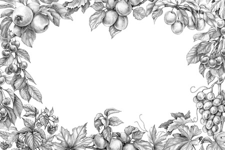 Hand drawn branches of fruit trees and bushes. Monochrome border with sketch fruits. Horizontal rectangle frame with apple, apricot, grape, plum, raspberry, cherry, space for text. Pencil drawing.
