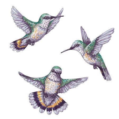 Ręcznie rysowane buczenie ptaków na białym tle. Zestaw kolorowych kolibry latające. Lot colibri z przodu iz boku. Szkic wektor.