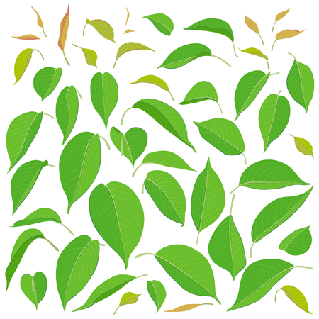 Green leaf set. Simplified big and small leaves isolated on white background. Natural elements vector illustration.
