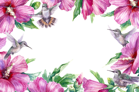 Watercolor painting. Hand drawn flying humming birds and pink flower on white background. Floral horizontal rectangle frame with small hummingbirds soaring near syrian hibiscus.   Stock Photo