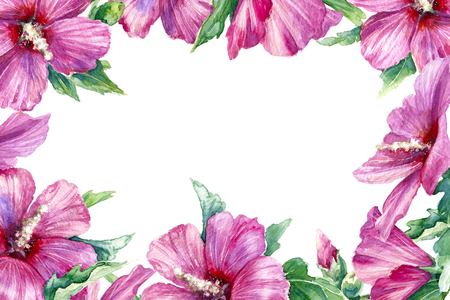 Watercolor painting. Hand drawn pink flower on white background. Floral horizontal rectangle frame with syrian hibiscus.
