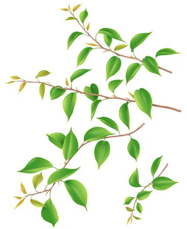 Rami di albero con foglie giovani grandi e piccole verdi isolate su bianco. Illustrazione 3d del fogliame di primavera realistico.