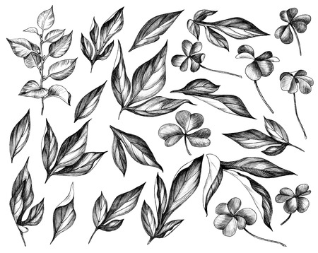 Hand drawn set of peony and shamrock leaves isolated on white background. Pencil drawing monochrome floral elements in vintage style.