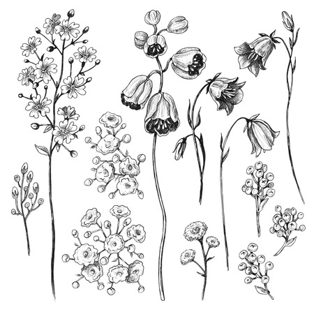 Hand drawn set of flowers of bluebells and gypsophila isolated on white background. Pencil drawing monochrome wild plants floral elements.