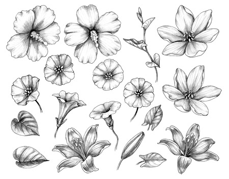 Hand drawn set of hibiscus, lily, and bindweed flowers isolated on white background. Pencil drawing monochrome floral elements in vintage style.