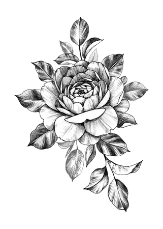 Hand drawn rose bunch with flower and leaves isolated on white background. Pencil drawing monochrome floral composition in vintage style. Banco de Imagens - 118980132