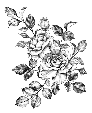 Hand drawn bunch with rose flower, buds and leaves isolated on white background. Pencil drawing monochrome floral composition in vintage style.